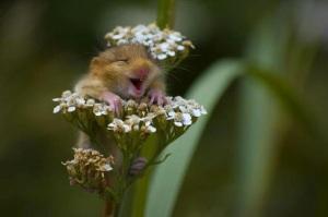Awwwww Yeah Flowers!